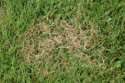 Lawn Problems Vert Lawn Care